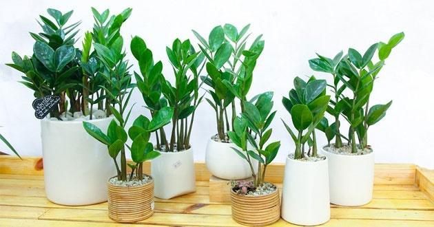 Bật mí loài cây phong thủy sẽ mang lại may mắn, thịnh vượng cho 12 con giáp-1
