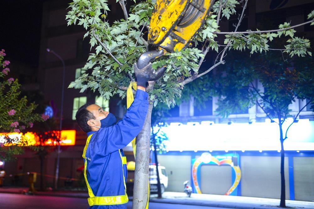 Hàng chục công nhân xuyên đêm di chuyển hàng cây phong lá đỏ trên đường Trần Duy Hưng-7