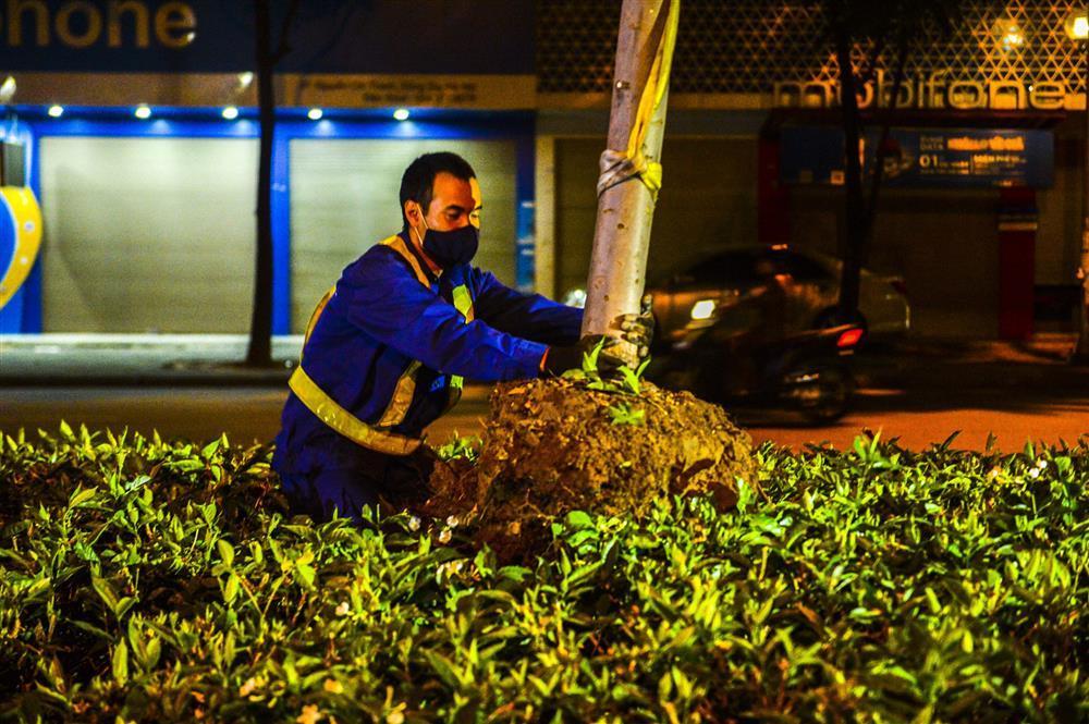 Hàng chục công nhân xuyên đêm di chuyển hàng cây phong lá đỏ trên đường Trần Duy Hưng-8