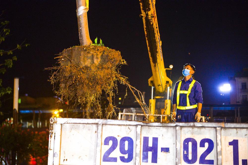 Hàng chục công nhân xuyên đêm di chuyển hàng cây phong lá đỏ trên đường Trần Duy Hưng-9