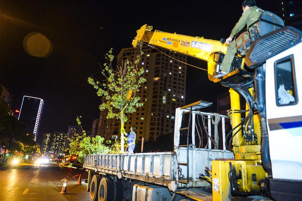 Hàng chục công nhân xuyên đêm di chuyển hàng cây phong lá đỏ trên đường Trần Duy Hưng-10