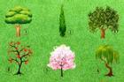 Loại cây bạn muốn trồng trong vườn tiết lộ điều gì về tính cách của bạn?