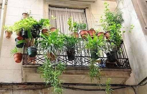 4 loại cây trồng ở ban công giúp thu hút tài lộc, nhà ở càng lâu càng phát tài-1