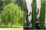 5 loại cây 'khắc' Thần tài, trồng trước cửa nhà tài lộc khó đến