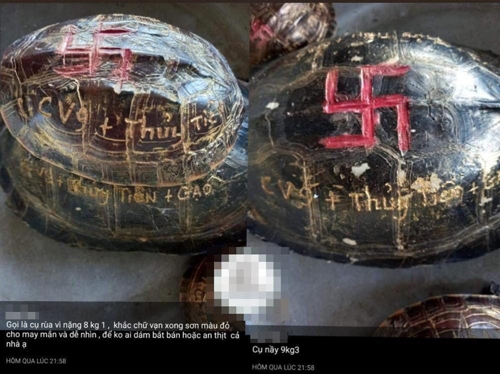 Clip: Thủy Tiên nuôi kiến giữa ồn ào khắc tên lên mai rùa-2