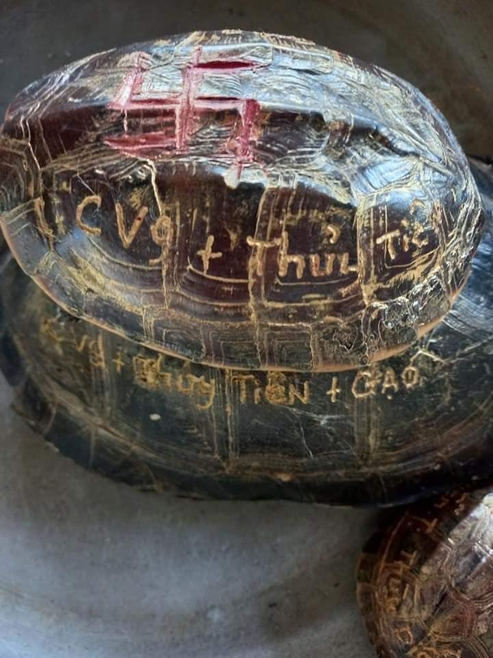 Clip: Thủy Tiên nuôi kiến giữa ồn ào khắc tên lên mai rùa-3