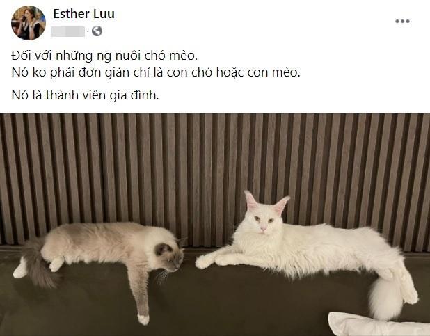 Hari Won viết tút thương con mèo liền bị hỏi: Người dân là con gì?-2