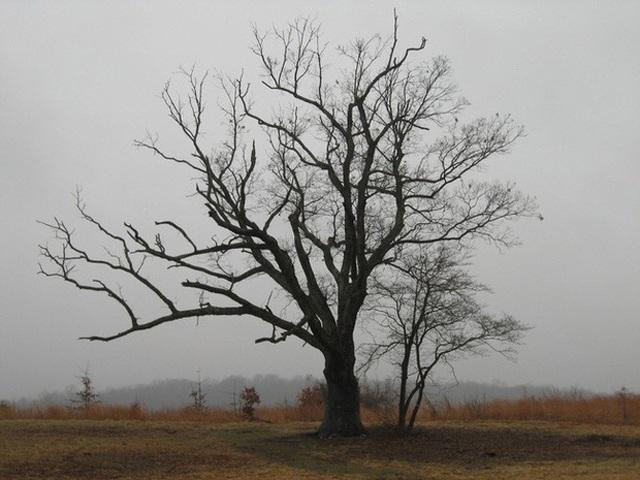 Kỳ bí cây của quỷ già hơn 200 tuổi dẫn đến địa ngục-1