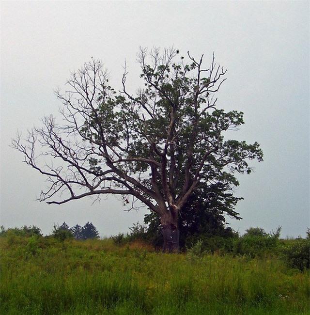 Kỳ bí cây của quỷ già hơn 200 tuổi dẫn đến địa ngục-2