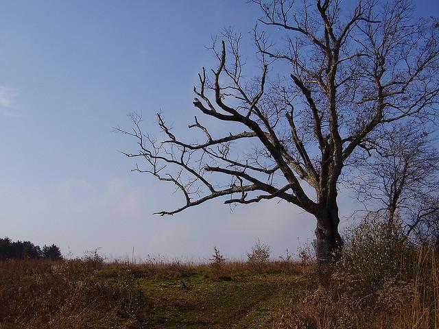 Kỳ bí cây của quỷ già hơn 200 tuổi dẫn đến địa ngục-3