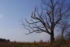 Kỳ bí 'cây của quỷ' già hơn 200 tuổi dẫn đến địa ngục