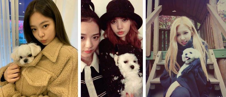 Số hưởng như cún cưng của Jisoo: 3 lãnh đạo Dior gửi quà sinh nhật gần 80 triệu-7