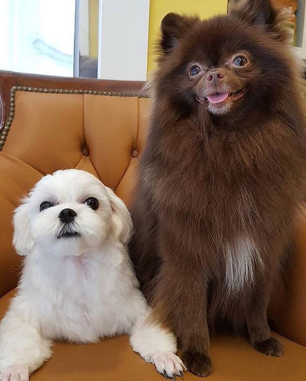 Số hưởng như cún cưng của Jisoo: 3 lãnh đạo Dior gửi quà sinh nhật gần 80 triệu-9