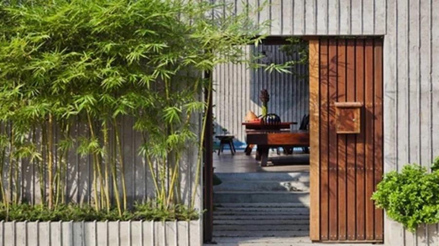 7 loại cây phong thủy trồng trước nhà giúp gia tăng may mắn tài lộc-1