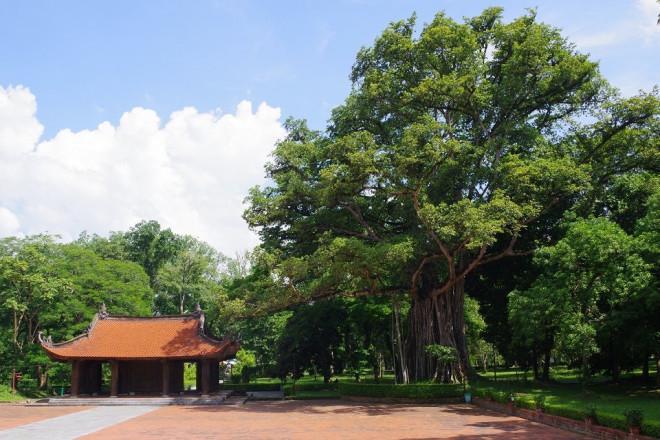 Chuyện kỳ bí về cây lim hoá thân và cây ổi cười ở đất thiêng Lam Kinh-2