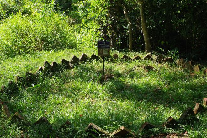 Chuyện kỳ bí về cây lim hoá thân và cây ổi cười ở đất thiêng Lam Kinh-3