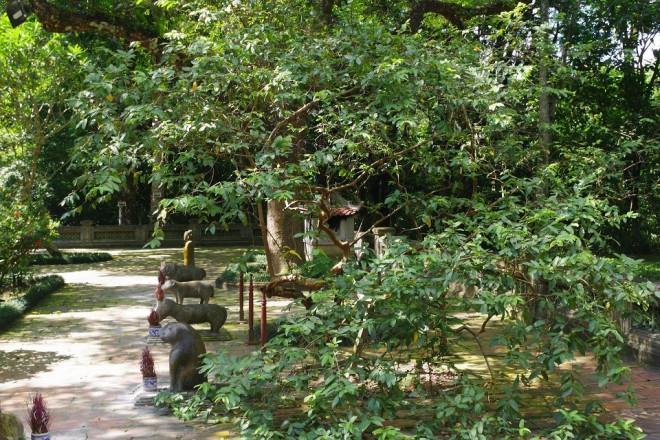 Chuyện kỳ bí về cây lim hoá thân và cây ổi cười ở đất thiêng Lam Kinh-5