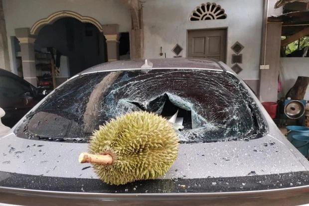 Thêm anh bán trái cây có nỗi buồn giống chị Phượng Chanel: Sầu riêng rụng làm kính xe ô tô vỡ nát-2