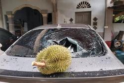 Thêm anh bán trái cây có nỗi buồn giống chị Phượng Chanel: Sầu riêng rụng làm kính xe ô tô vỡ nát