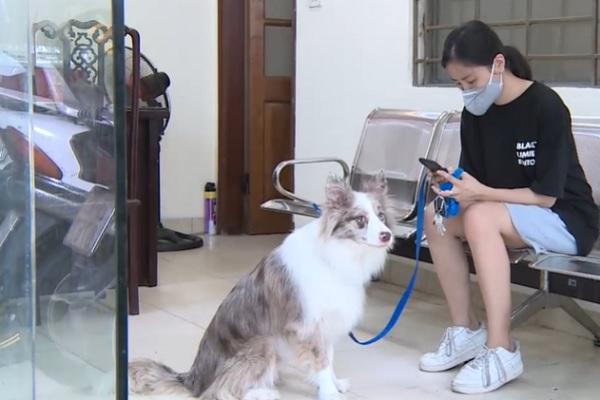 Video: Cô gái bị phạt 2 triệu đồng vì dắt chó đi dạo ở Hà Nội