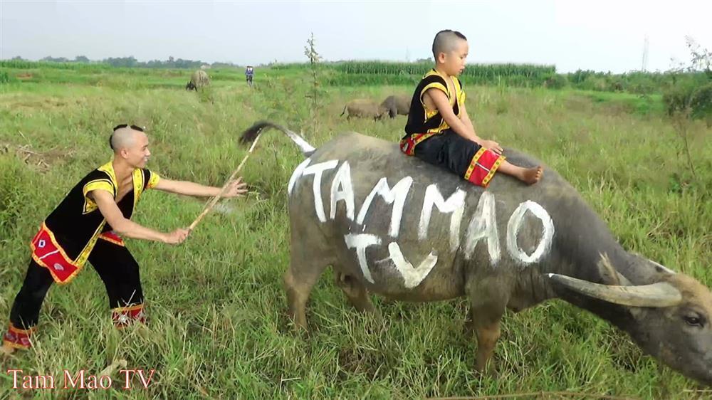 Tranh cãi Mao Đệ đút kẹo mút cho chó rồi mời Mao Ca ăn-1