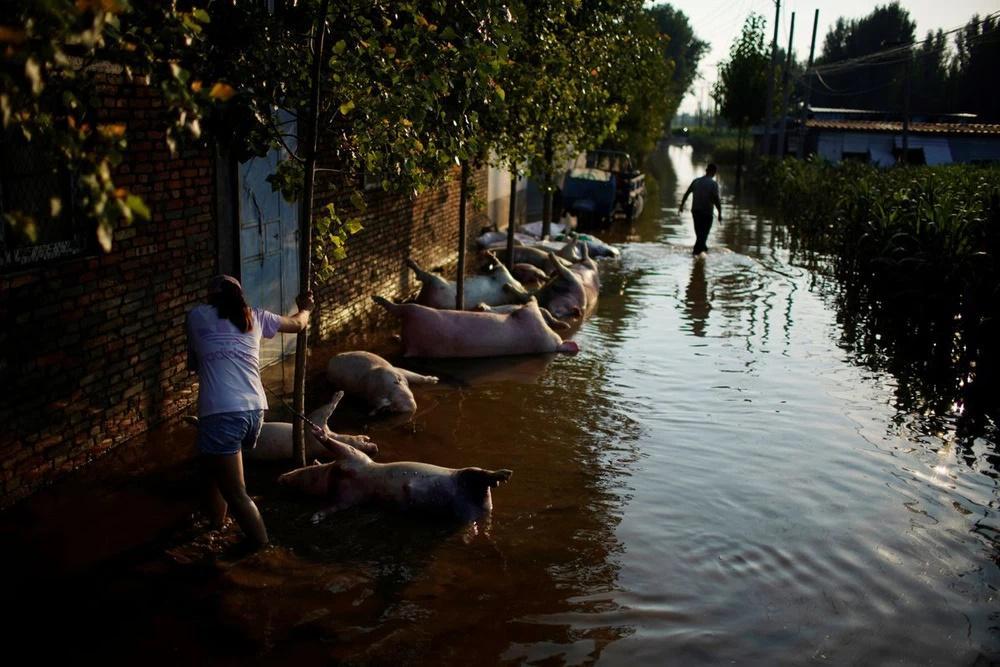 Mưa lũ nuốt chửng nguồn sống, nông dân TQ tuyệt vọng: Bầu trời sụp đổ!-1