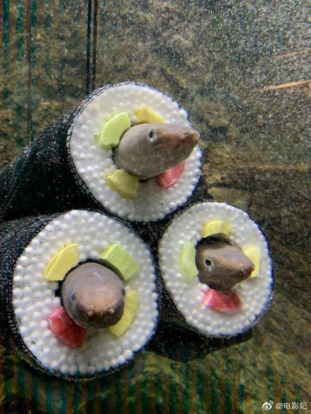 Chủ nhà nuôi lươn thiết kế thành hình kimbap nhìn hãi hùng, ám ảnh-2
