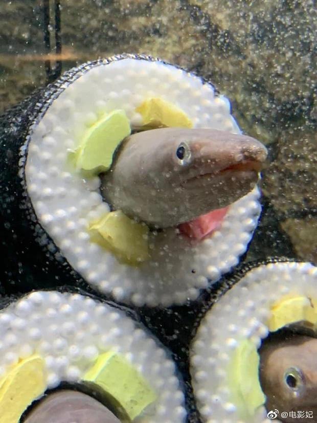 Chủ nhà nuôi lươn thiết kế thành hình kimbap nhìn hãi hùng, ám ảnh-3