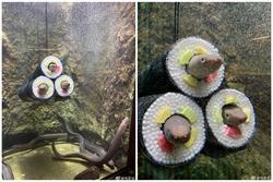 Chủ nhà nuôi lươn thiết kế thành hình kimbap nhìn hãi hùng, ám ảnh