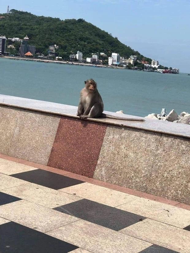Clip: Khỉ đói ở Vũng Tàu leo dây điện nhảy vào nhà dân ăn sạch rau quý-4
