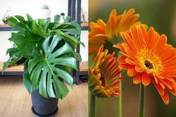 6 loại cây trồng trong nhà hút sạch chất độc hại, nâng cao sức khỏe