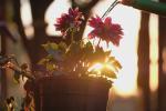 Tử vi 12 cung hoàng đạo thứ Sáu 30/7/2021: Kim Ngưu phiền muộn vì yêu