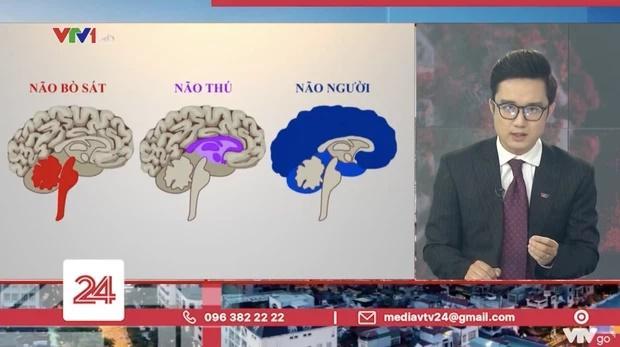 Tranh cãi VTV ví von não người - não thú cà khịa người vi phạm giãn cách-3