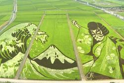 Kiệt tác từ cánh đồng lúa ở Nhật Bản