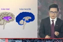 Tranh cãi VTV ví von 'não người' - 'não thú' cà khịa người vi phạm quy định giãn cách