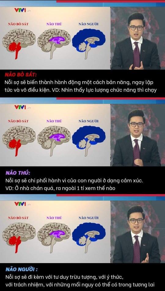 MC Trần Ngọc lửa cháy đổ thêm dầu khi VTV ví von não người, não thú-1