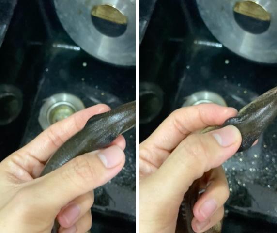 Mua lươn phát hiện chi tiết lạ, cô gái vứt đi rồi hỏi: Ăn được không?-3