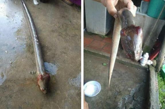 Mua lươn phát hiện chi tiết lạ, cô gái vứt đi rồi hỏi: Ăn được không?-6