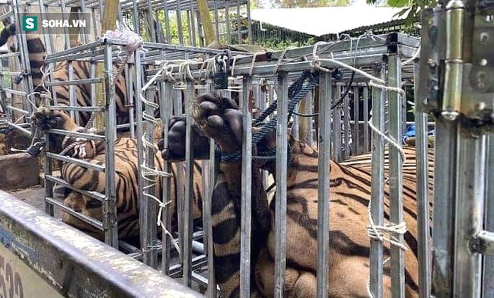 Cận cảnh chuồng trại nuôi nhốt 17 con hổ vừa bị công an triệt phá-10