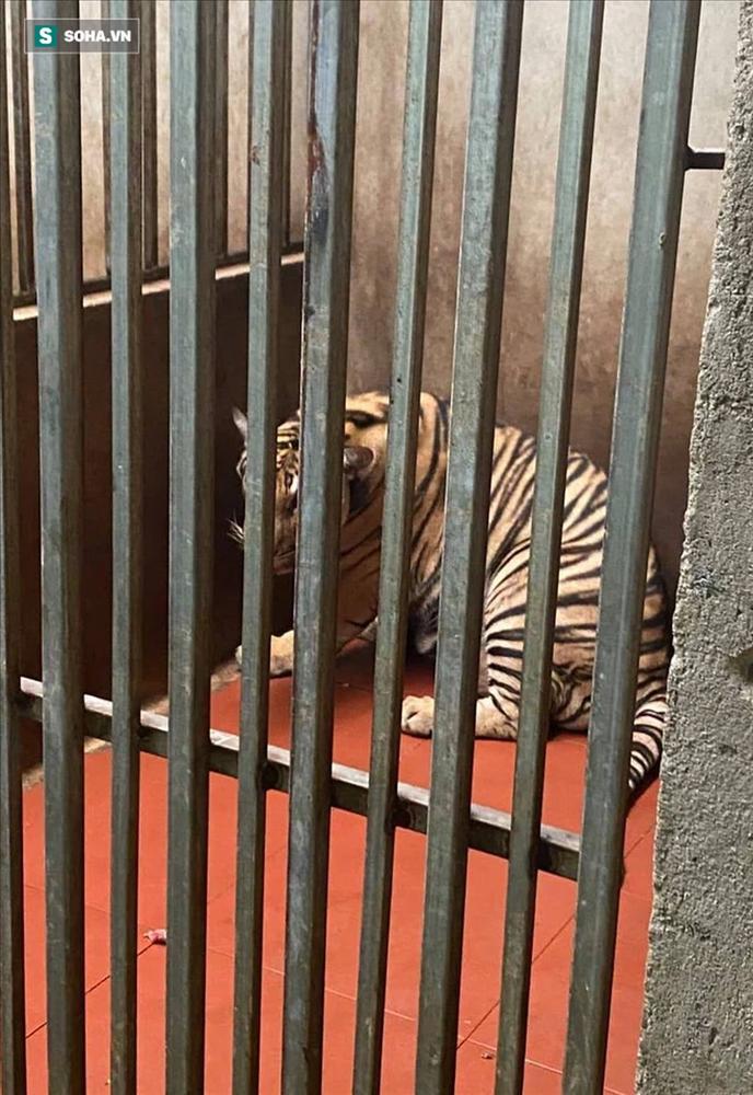 Cận cảnh chuồng trại nuôi nhốt 17 con hổ vừa bị công an triệt phá-3