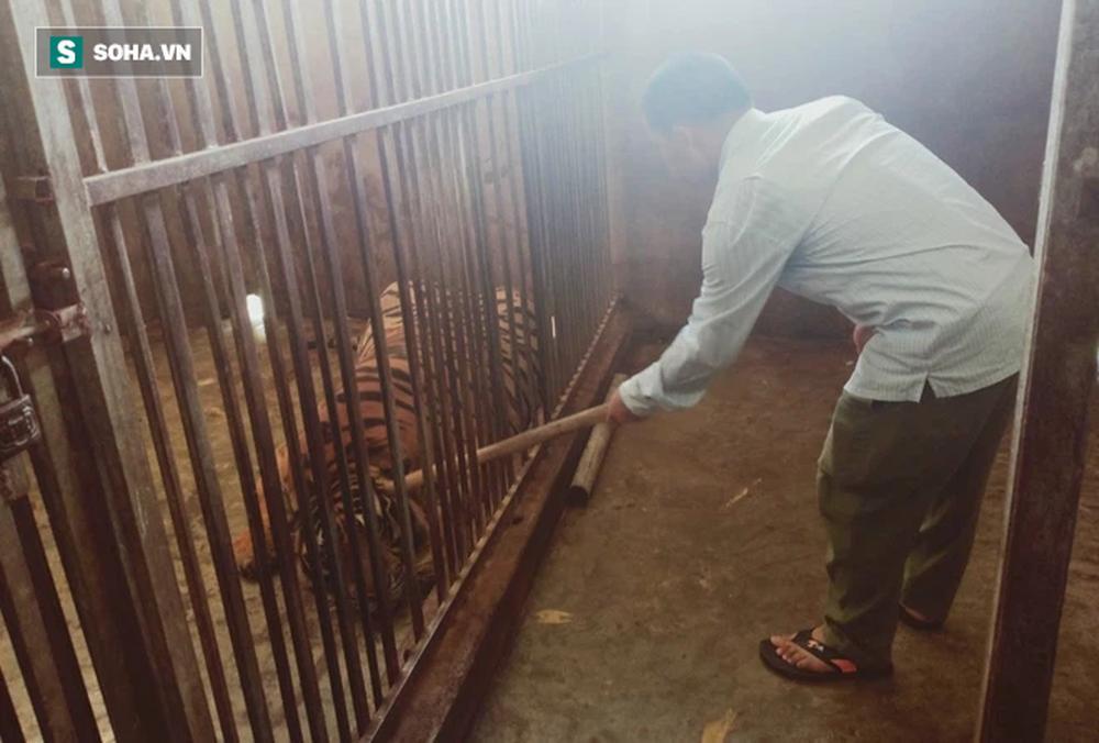 Cận cảnh chuồng trại nuôi nhốt 17 con hổ vừa bị công an triệt phá-6