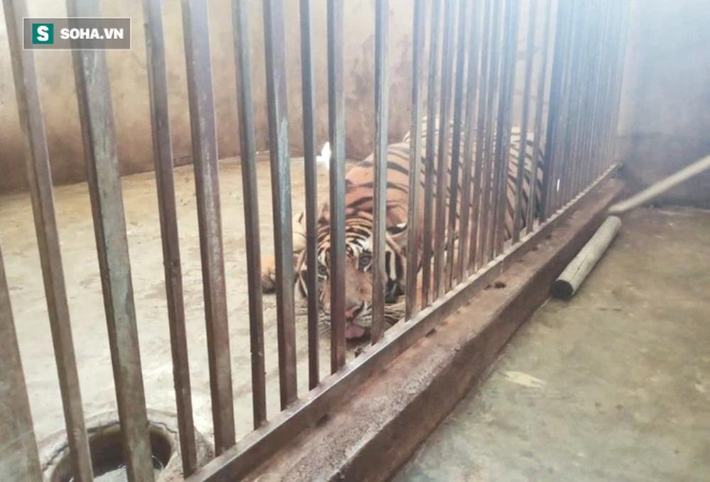 Cận cảnh chuồng trại nuôi nhốt 17 con hổ vừa bị công an triệt phá-7