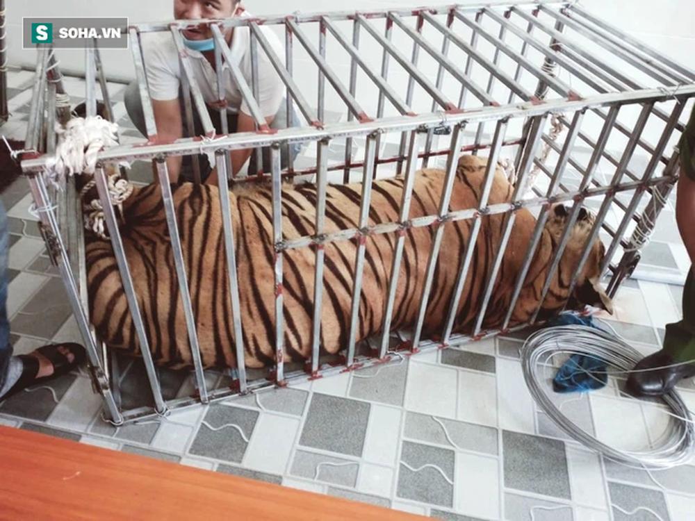 Cận cảnh chuồng trại nuôi nhốt 17 con hổ vừa bị công an triệt phá-8