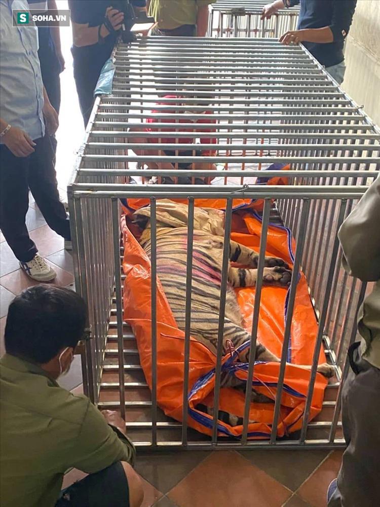 Cận cảnh chuồng trại nuôi nhốt 17 con hổ vừa bị công an triệt phá-9