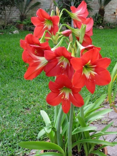 5 loại cây chớ trồng trong nhà kẻo vận xui kéo về, tài lộc tiêu tán-2