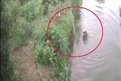 Clip: Thót tim cháu bé ngã xuống hồ, suýt bị thần chết cướp mạng