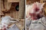 Đôi vợ chồng bị dân mạng tố mua mèo về bạo hành