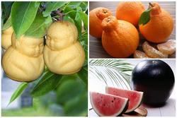 Những loại trái cây 'siêu quý', có tiền chưa chắc đã mua nổi
