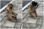 Khỉ bao vây du khách để xin ăn ở Thái Lan-1