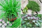5 loại rau thơm lừng trồng tại nhà, vừa có rau ăn lại vừa làm thuốc